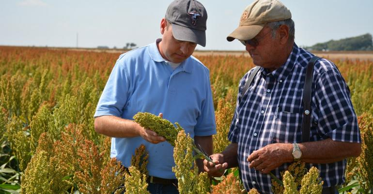 Scott and Albert Irlbeck check for sugarcane aphids in grain sorghum on their Tulia Texas farm Scott left a career in journalism last April to come back to the family farm