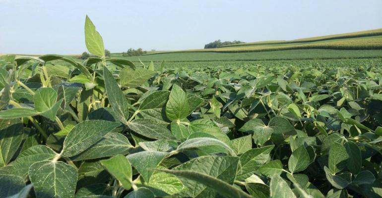 What does it take to get a top soybean yield One company is helping farmers answer the question with an entertainment approach in a new podcast