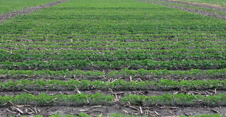 Extra fertilizer including phosphorus potassium nitrogen and several micronutrients resulted in fastergrowing greener soybeans in University of Illinois plots