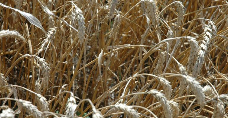 87 percent chance of wheat price above cost of production
