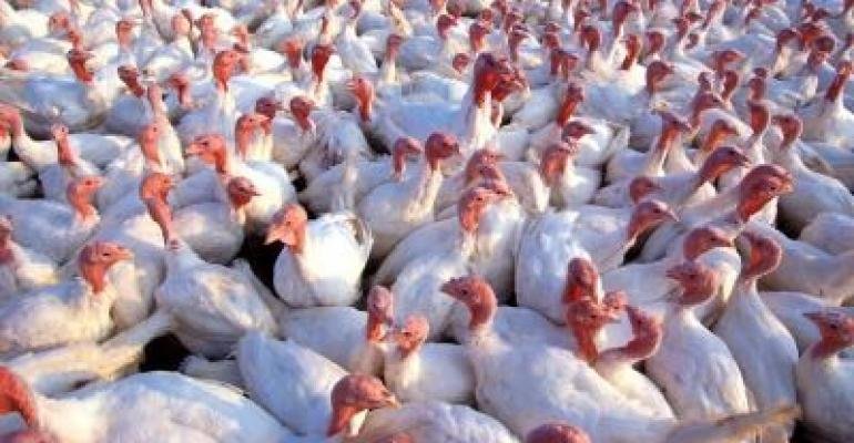 Avian influenza risk rises with onset of fall migration
