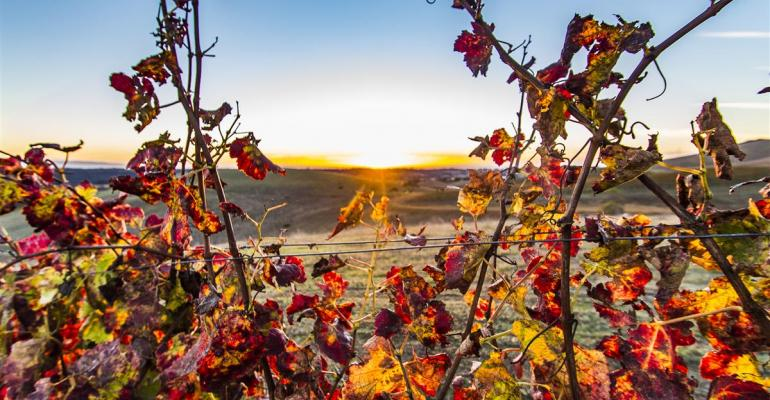 Vineyard prices remain strong in California