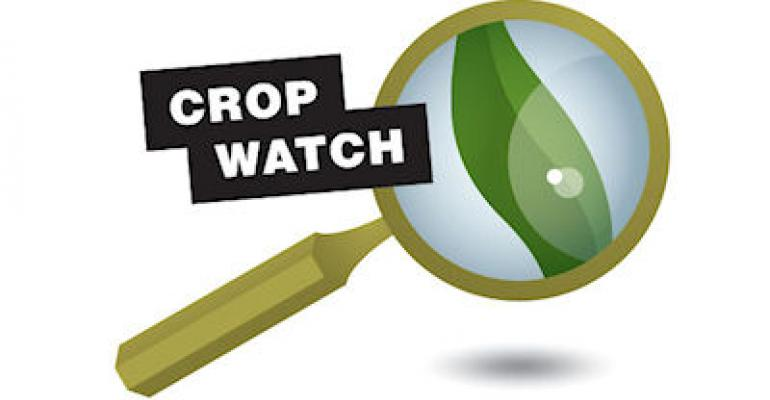 Quick emergence in warm soils starts off Crop Watch season
