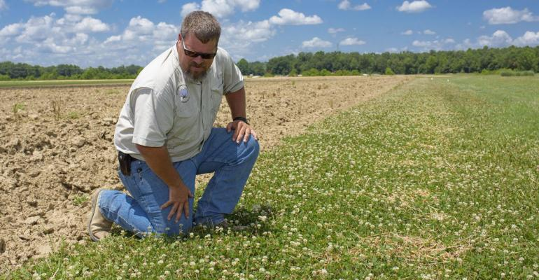 What looks like weeds to a farmer or landowner is forage for pollinators such as honeybees Angus Catchot and other researchers at Mississippi State University are part of efforts to find management plans that balance competing needs