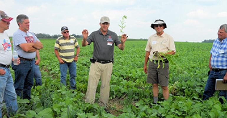 Cover crops pay back 7 ways in no-till's stealth mode