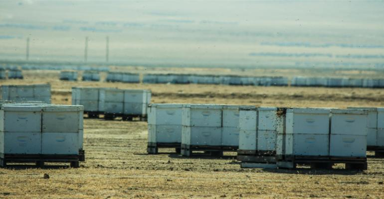 Overwintering bee hives in Central California