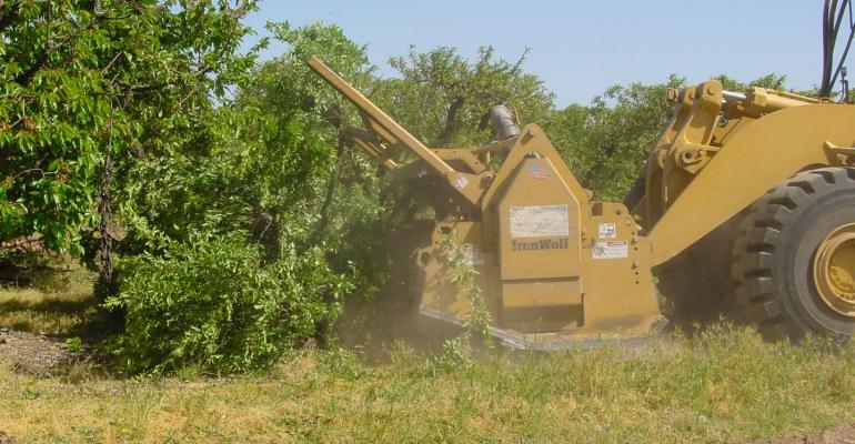 Grinding orchards has soil health benefits