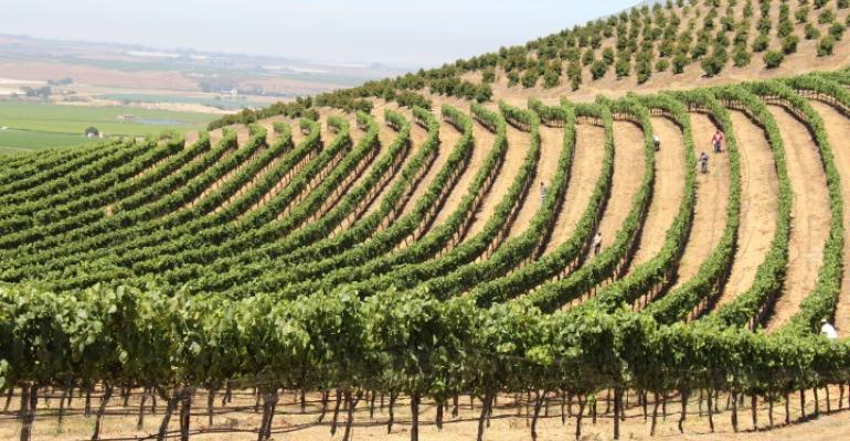 New technologies to transform the grape industry?