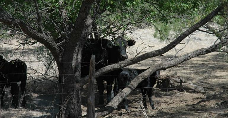 Cattle numbers continue to grow after a long drought depleted the herd