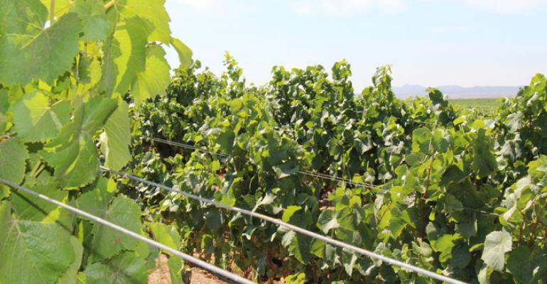 How to properly sample your vineyard when checking grape maturity