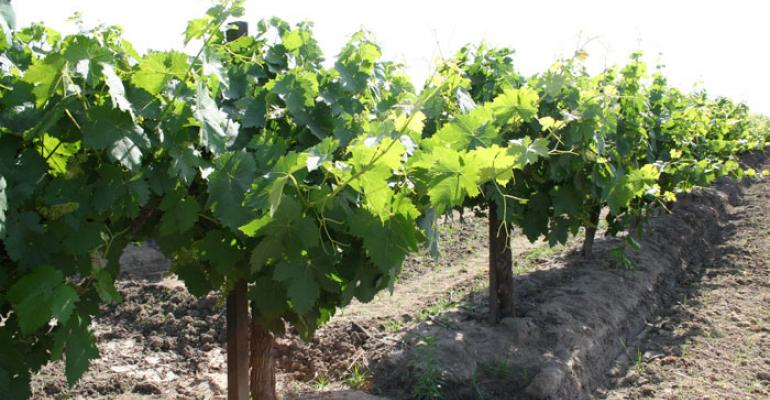 Promising cluster growth sets up Sierra Foothills vineyard for a good harvest