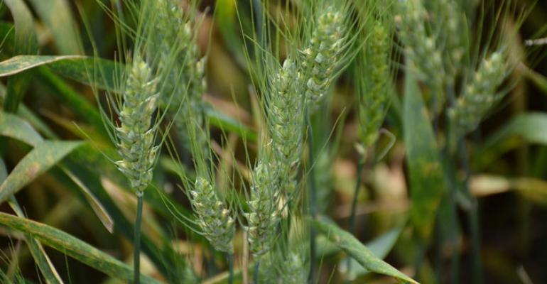 Bloomberg: For Kansas wheat farmers, it's all about that yield, not acres