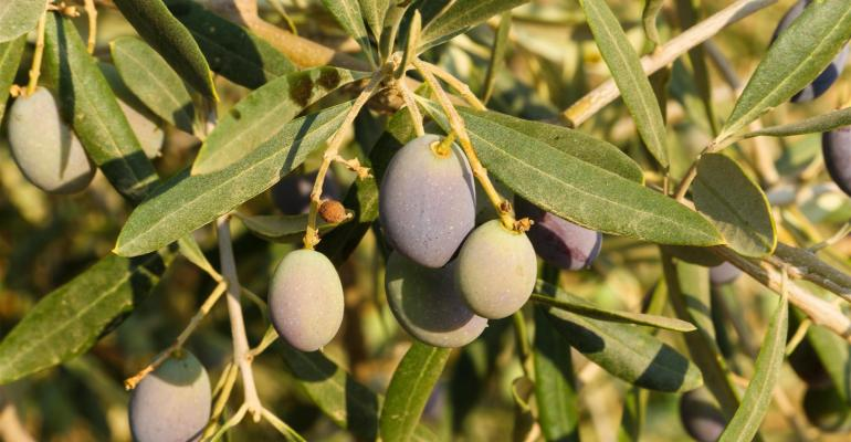 University of California report cites cost study for growing olives