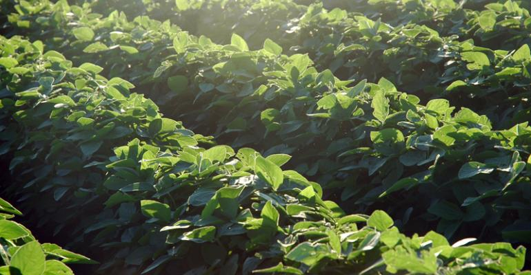 Lights are dimming on soybean price recovery