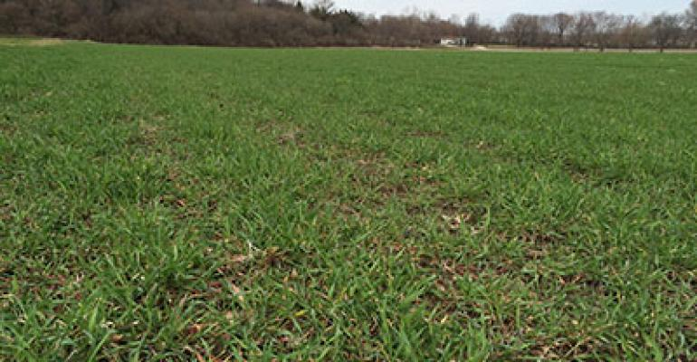 Cereal rye is king of cover crops