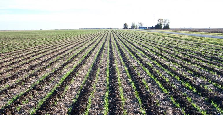 Cropping system changes may mean reduced nitrates