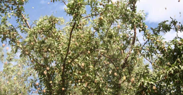 Researchers study 'mysterious' lower limb dieback disease in almond