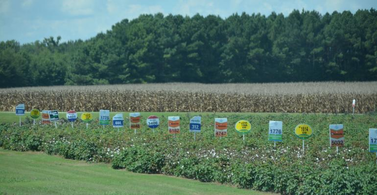 Variety plots at the West Tennessee Research and Education Center