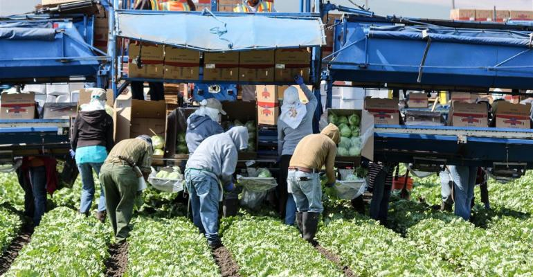 California lettuce harvest could become more expensive under new law