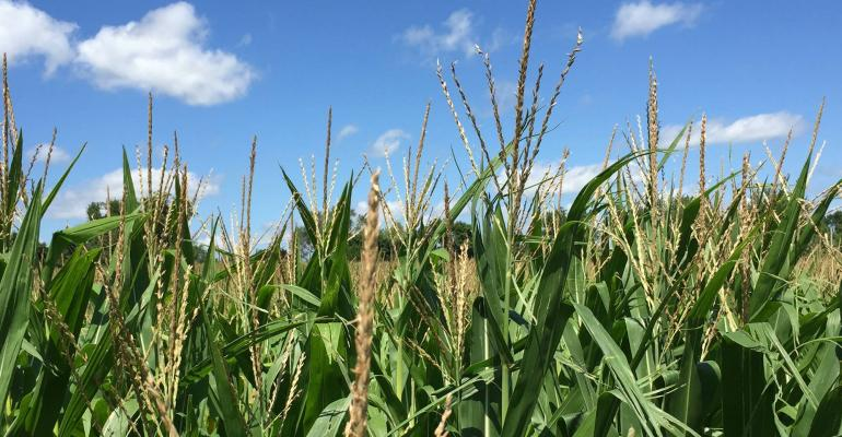 Corn and sorghum growers know the value of atrazine to their farm businesses and many have submitted public comments to EPA as part of the ecological reregistration process