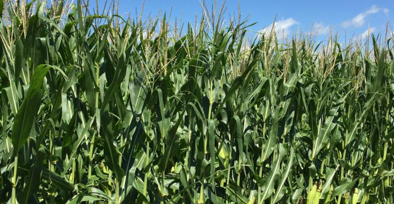 Raising a healthy productive corn crop requires fertilizer and crop protection products like atrazine But new biotech tools could be challenged for the future too