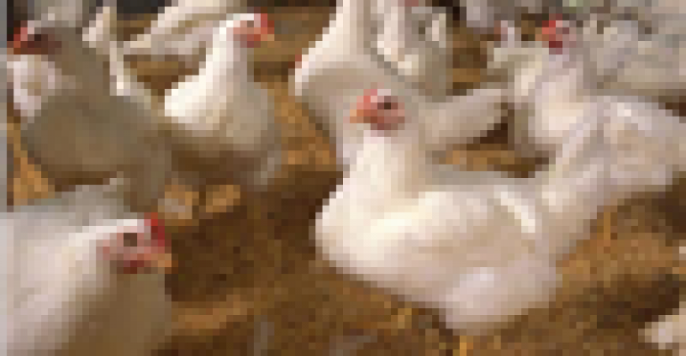 Chickens are people and other lies I learned reading the Huffington Post