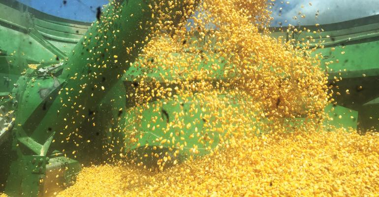 PURE GOLD mdash Golden corn kernels pour out of a combine Taken Sept 6 2016 Arkansas U of A System Division of Agriculture photo by Kevin Lawson