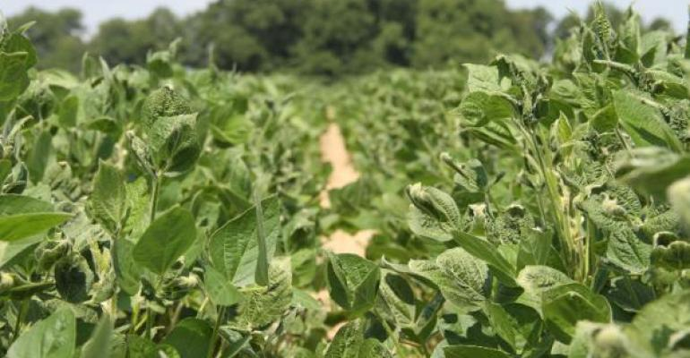 New research shows solutions to ugly dicamba saga closer