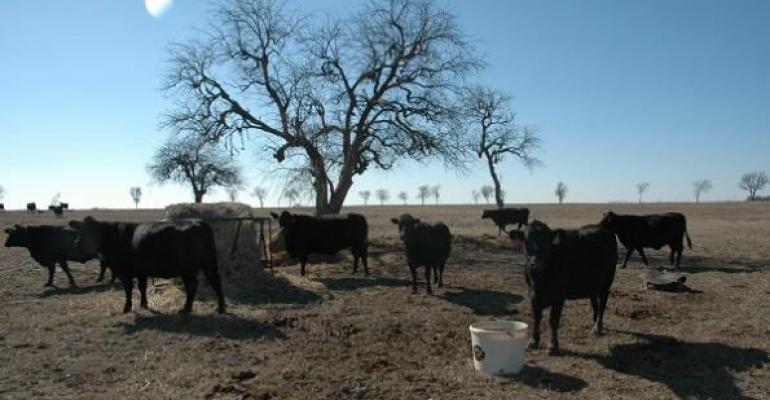 Managing beef herds including taking care of recommended practices such as castration will add value at the sale barn