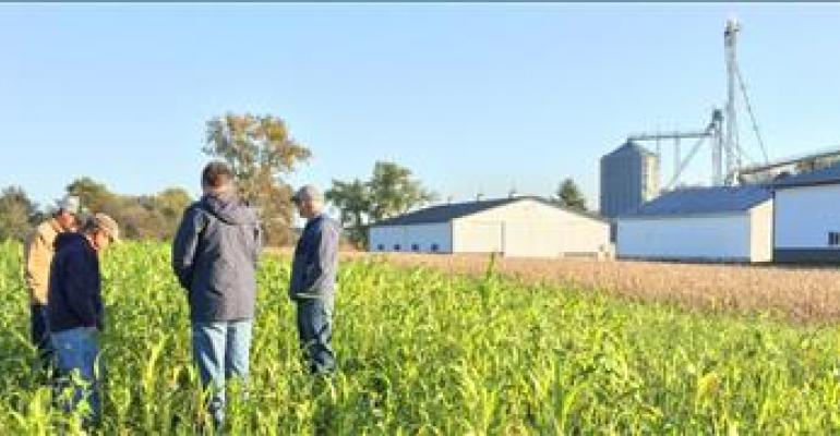 Plan now to scout cover crops through spring