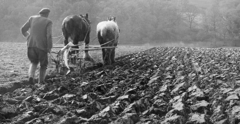 two horses pulling plow with farmer in field