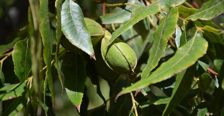 New Mexico pecan harvest is late