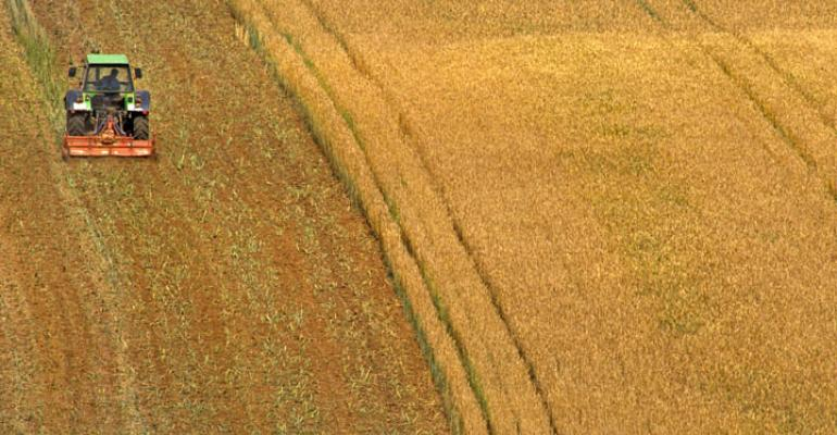 Wheat surge: global acres to increase 4 percent