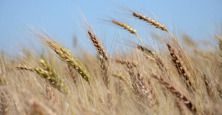 Wheat surges on export hopes