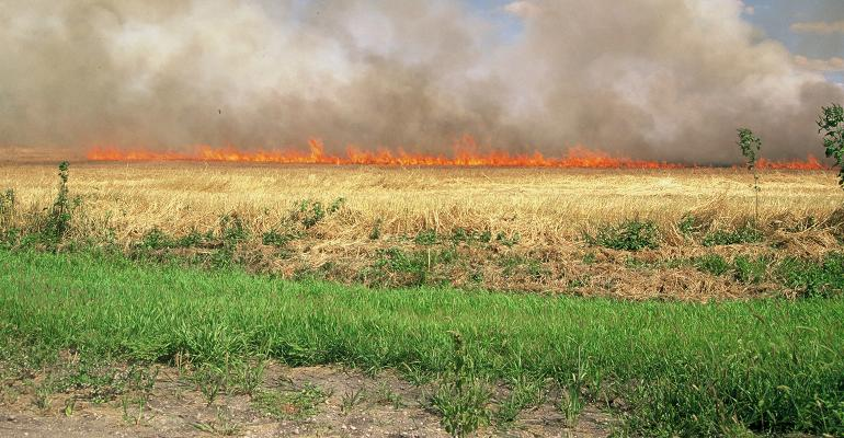 dry field burning