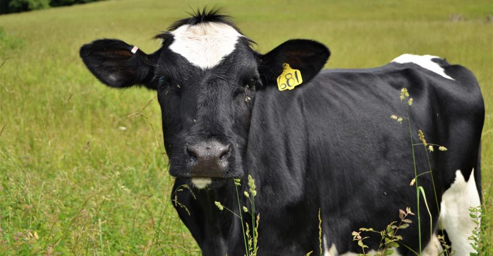 Missouri Dairy Hall of Honors recognizes 5 leaders
