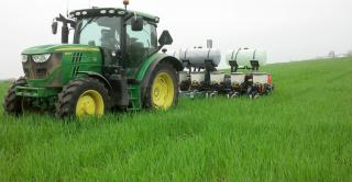 Tractor seeding into lush green cover crop