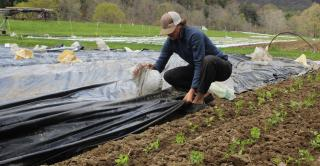 Root Five Farm is in a windy location, so sandbags are used to hold the heavy tarps down on the beds