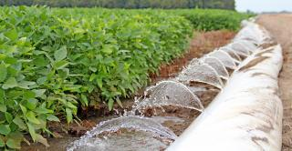 DFP-Staff-Polypipe-Irrigation-Soybeans.jpg