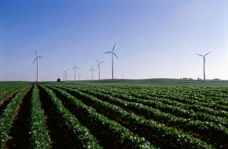 Wind turbines in background with soybean field in foreground.