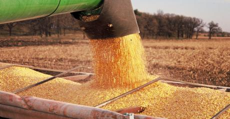 auger loading corn into truck