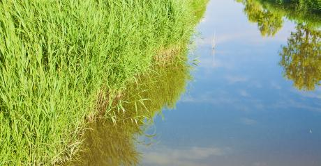 water in grassy ditch