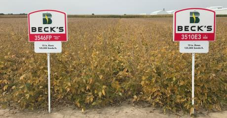 10-inch row soybeans