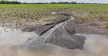 flooded cornfield in spring