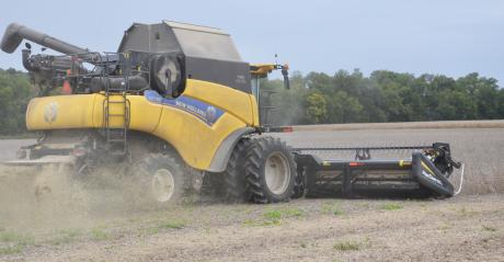 New Holland combine harvesting beans