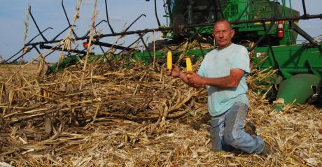 Don Van Dyke in his field of early harvested downed corn.