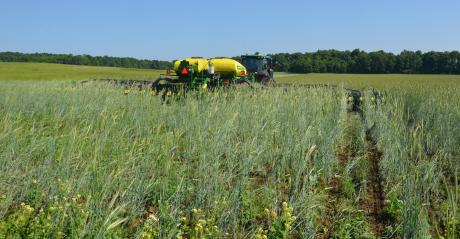 tractor and planter planting into green cover crops