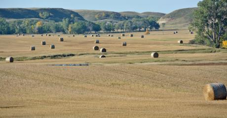 landscape of round bales in a field