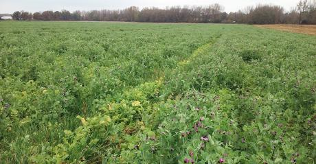 lush green field of cover crops