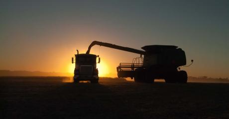 A combine, silhouetted in the sunset, dumps soybeans into a semi tractor-trailer in a dusty soybean field